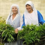 "Narco Nuns: Sisters Make Oil And Soap From Cannabis Believing It Is A ""Gift From God"""